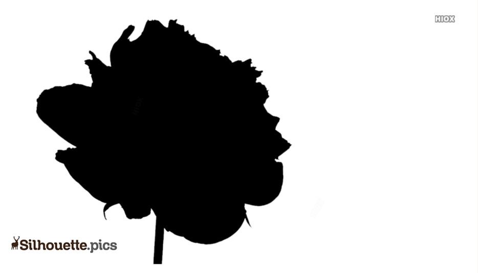 Peonies Flowers Silhouette Image