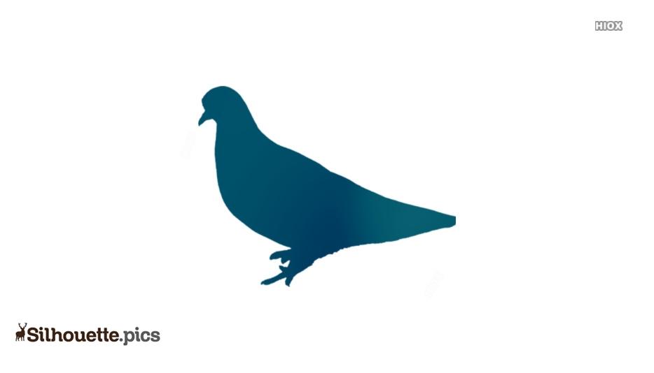 Pigeon Silhouette Illustration