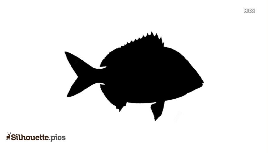 PinFish Drawing Silhouette