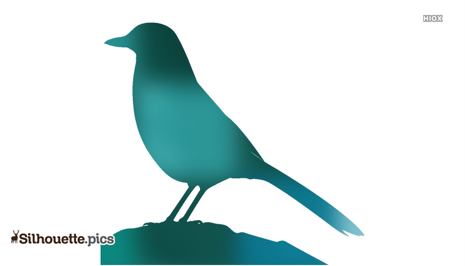 Pinyon Jay Bird Clipart Silhouette