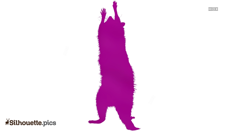 Raccoon Silhouette Clip Art Image