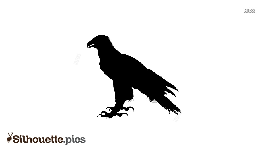 Real Eagle Bird Silhouette