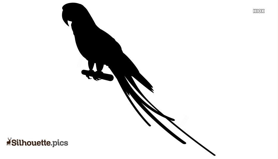 Ringneck Parakeet Silhouette
