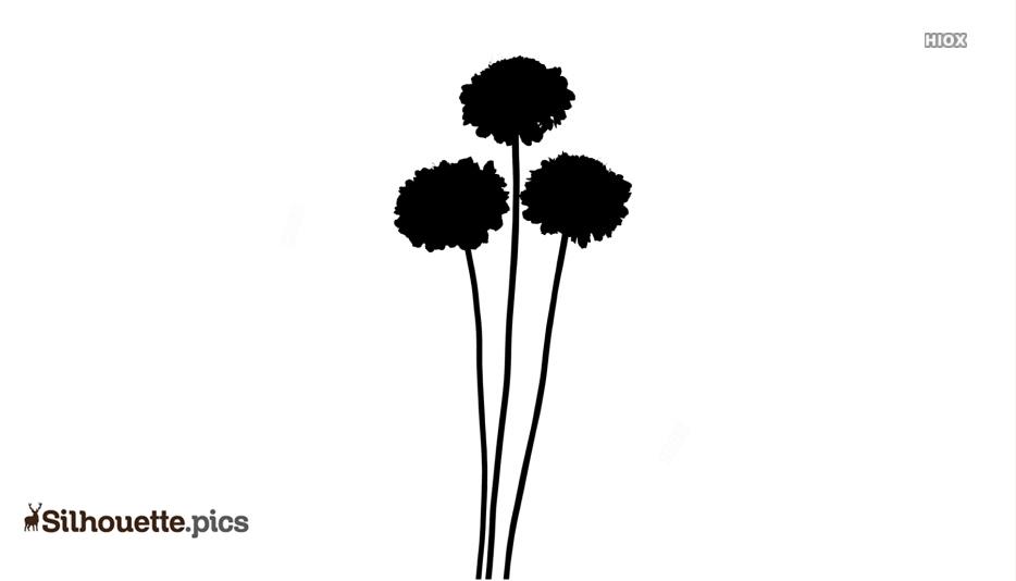Scabiosa Flower Silhouette Art