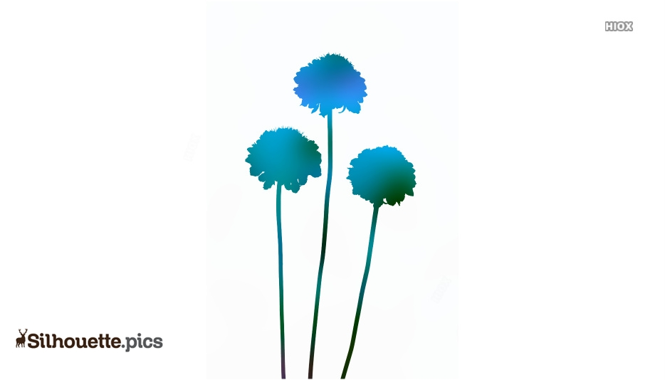 Scabiosa Flower Silhouette Free Vector Art