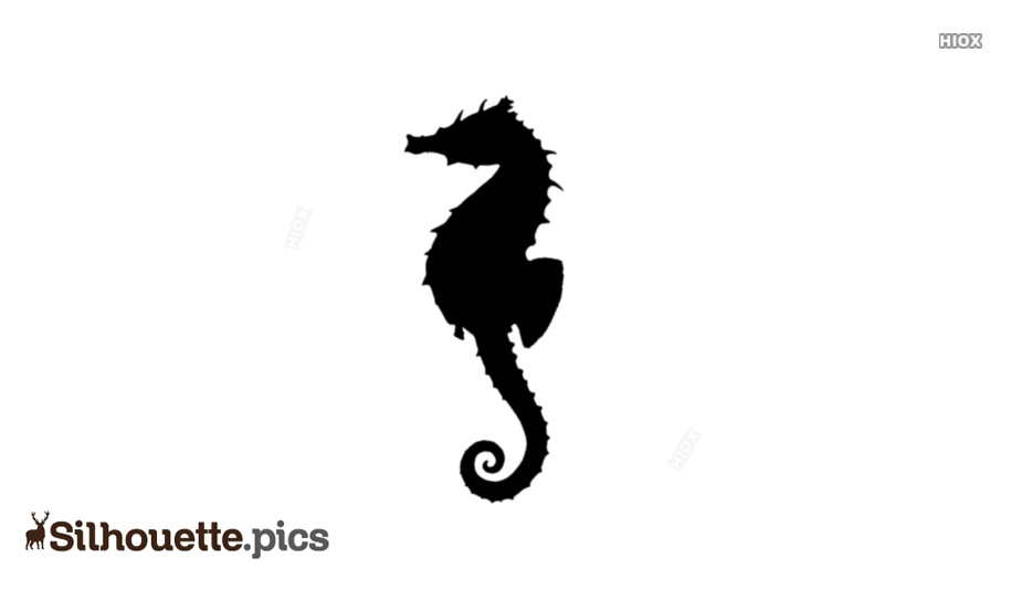 Seahorse Drawing Silhouette