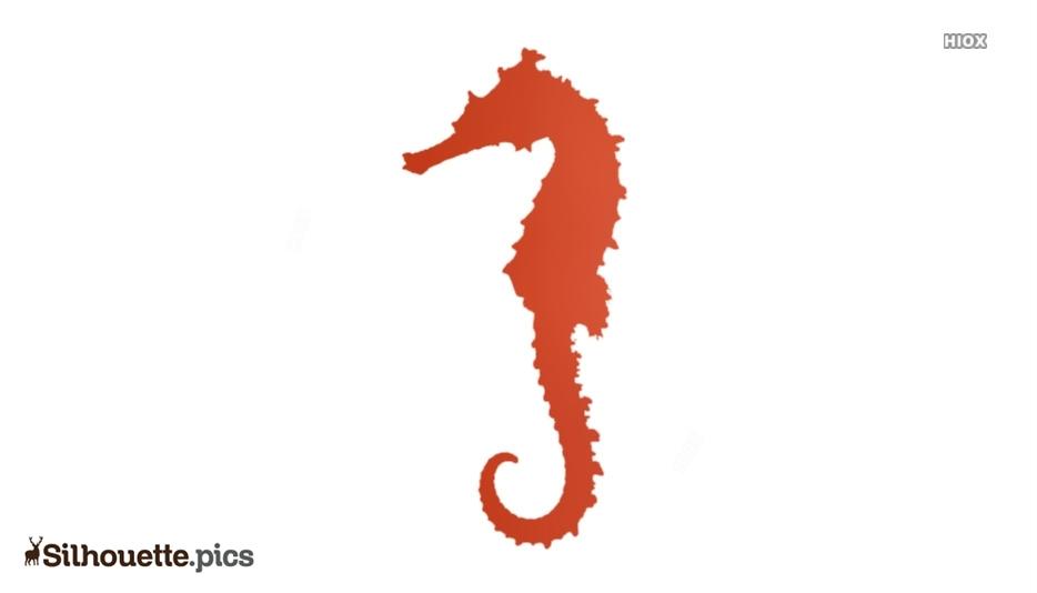 Seahorse Silhouette Picture