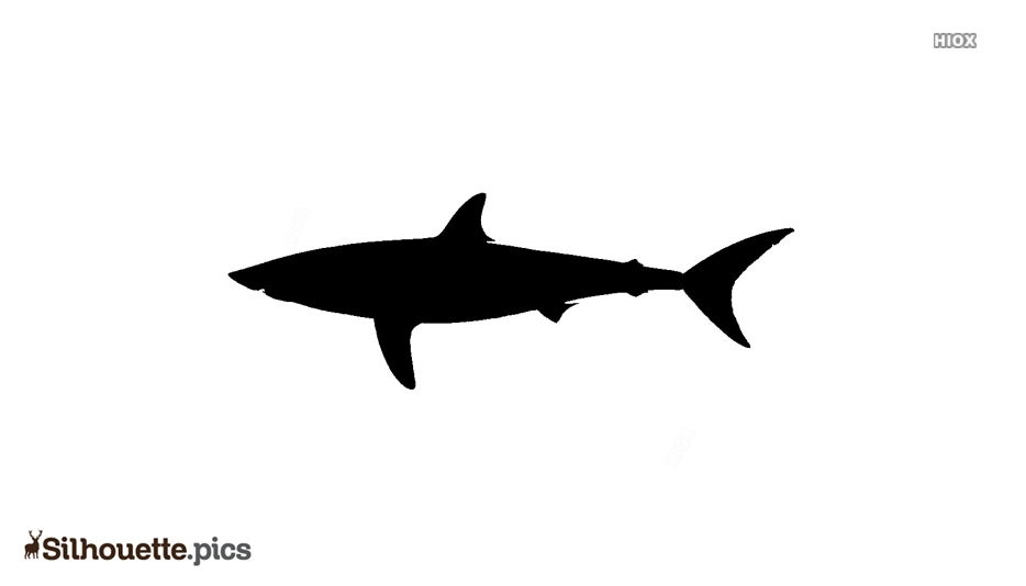 Shark Drawing Silhouette Background