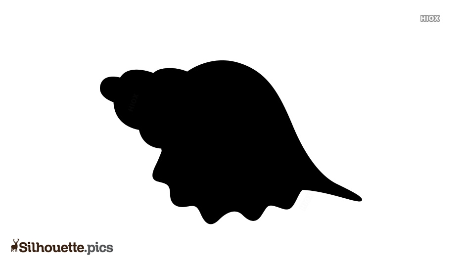 Shell Silhouette Vector and Graphics