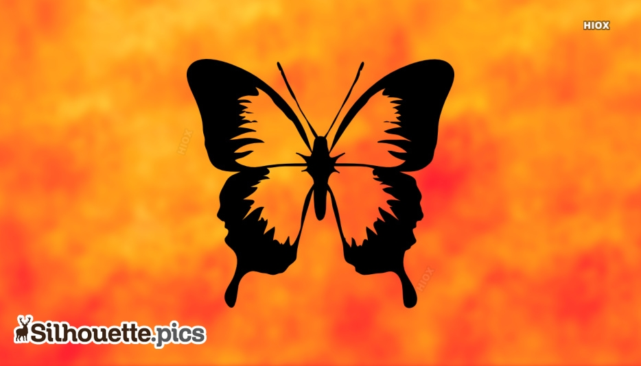 Insects Silhouette Images