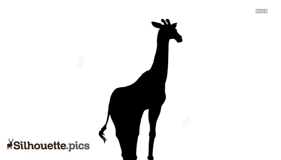 Giraffe Silhouette Images