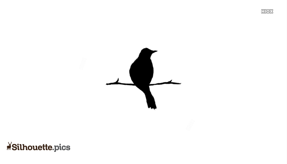 Small Bird Sitting On Branch Silhouette Background