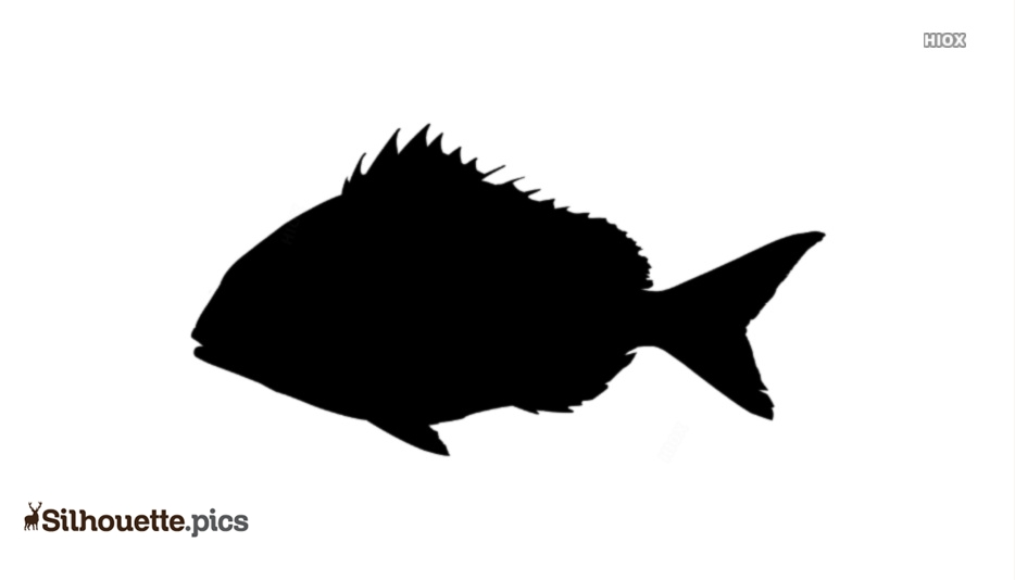 Snapper Fish Silhouette Vector And Graphics