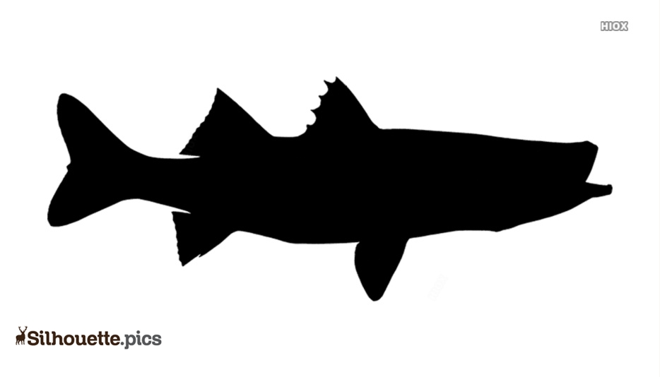 Snook Fish Silhouette Free Vector Illustration