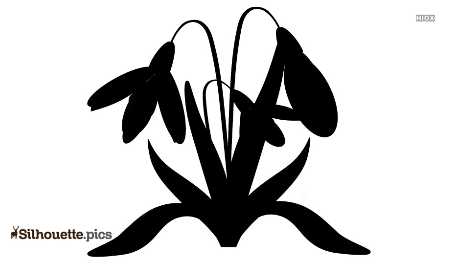 Snowdrop Drawing Silhouette Clip Art