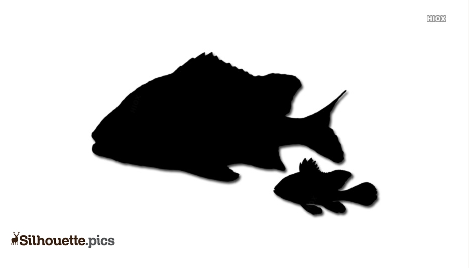 Spot Fish Symbol Silhouette