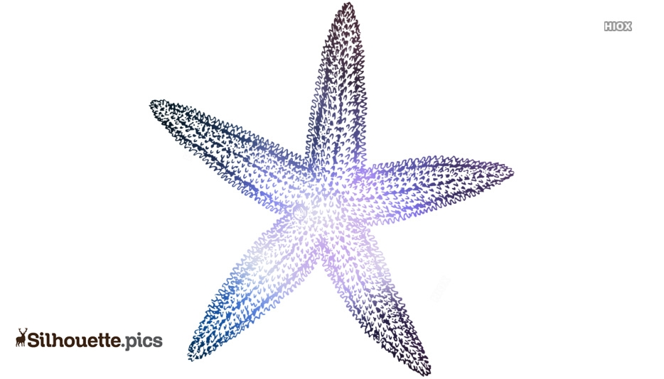 Starfish Drawing Silhouette, Clipart