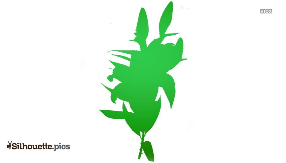 Stargazer Lily Flower Silhouette Image And Vector