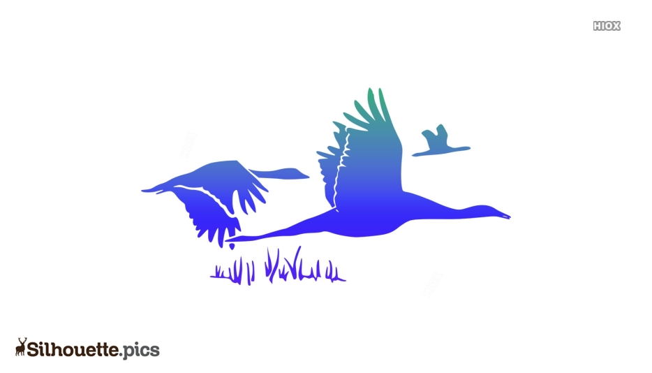 Swan Flying Silhouette Vector And Graphics