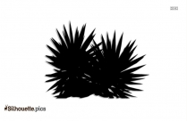 Aloe Vera Silhouette Drawing, Black And White Medicinal Plants Image