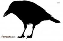 American Crow Silhouette Clip Art