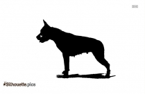 Hinny Animals Wallpaper Silhouette