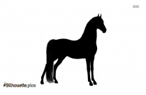 Horse Head Drawings Realistic Silhouette Image And Vector