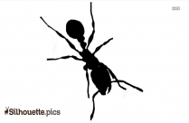 Ant Silhouette Images