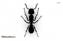 Ant Silhouette Drawing