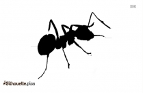 Ant Silhouette Vector Image