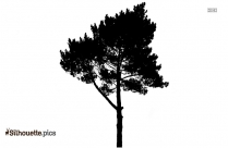 Realistic Tree Willow Tree Silhouette