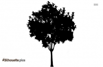 Tree Silhouette Picture