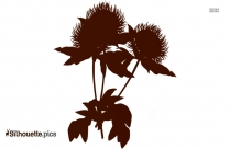 Aster Flower Silhouette Drawing