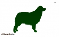 Border Collie Dog Breed Vector Silhouette