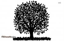 Maple Tree Silhouette Image