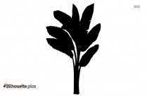 Banana Tree Silhouette Picture
