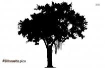 Pachypodium Plant Silhouette