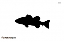 Bass Fish Silhouette Image And Vector