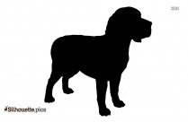 Border Collie Background Silhouette