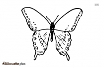 Butterfly Drawing Silhouette Image And Vector Art
