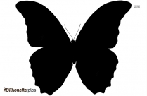 Butterfly Tattoo Silhouette Drawing Picture