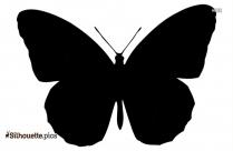 Wonderful Butterfly Image Silhouette