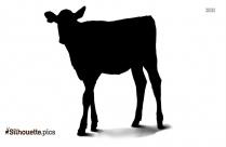 Calf With Shadow Silhouette