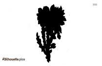 Flower Drawings Silhouette Picture