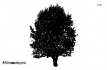 Pine Tree Logo Silhouette Image For Download