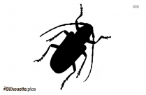 Insects And Flies Silhouette Image