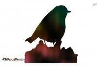Ocean Birds Silhouette Image
