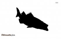 Barracuda Fish Silhouette Black And White