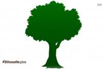 Big Tree Silhouette Picture