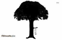 Bare Fig Tree Silhouette Background